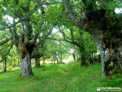 Sierra del Rincón_Montejo de la Sierra_La Hiruela; senderismo selva negra madeira senderismo sierrad